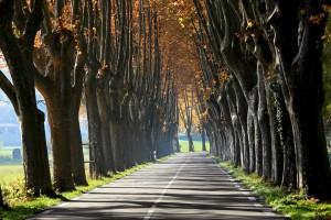 Route Provence platane arbre asphalte bitume