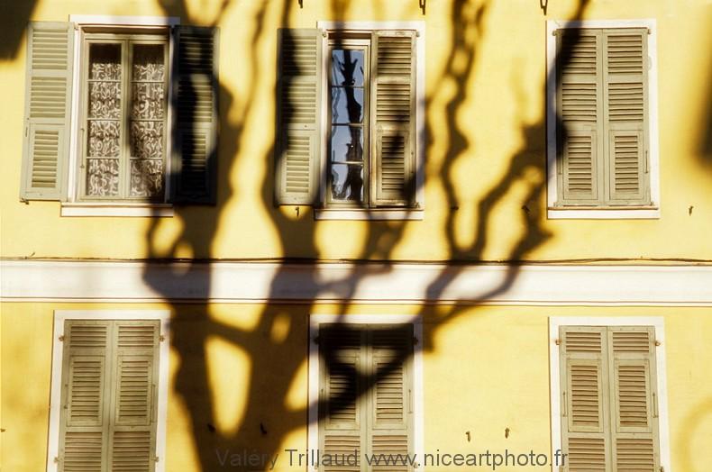 architecture Nice façade platane arbre