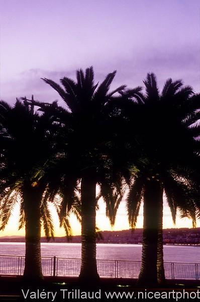 Palmier Nice soir coucher soleil