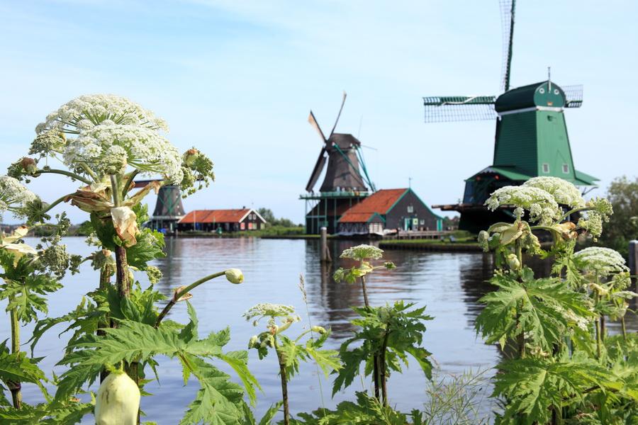 Les moulins de Zaanse Schans Hollande