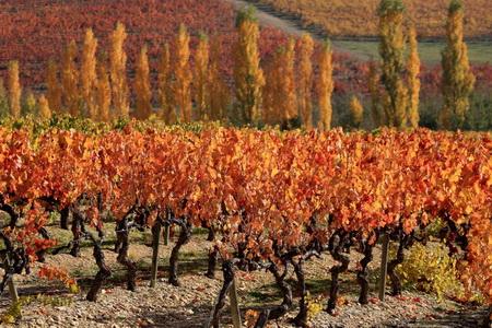 Vignoble du Luberon