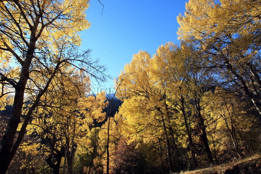 vallee du haut var foret d'automne