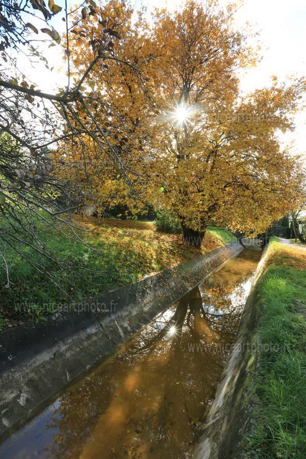 arbre automne et soleil avec canal