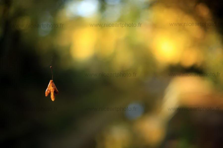 Feuille d'automne suspendue à un fil